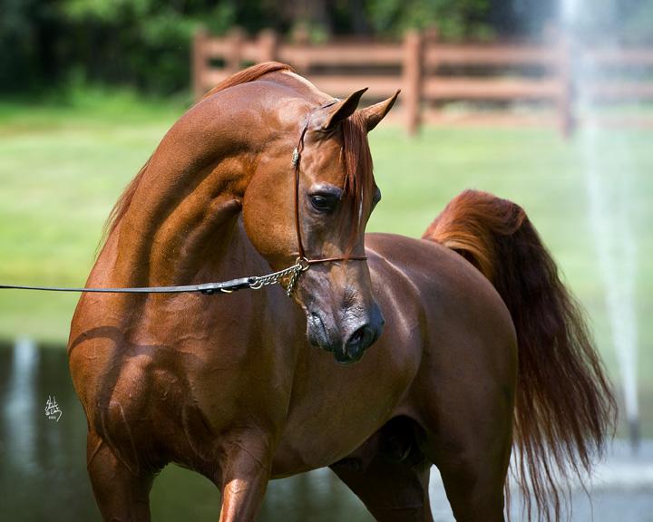 Brinkman Arabian Stables